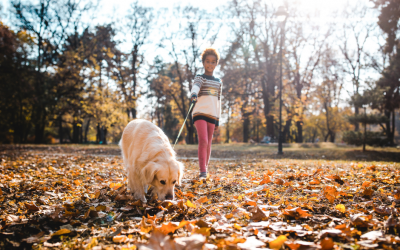 Responsibility & Connection: How Pets Can Support Mental Health